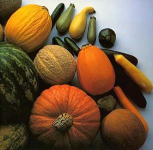 Cucurbits (Butternut, Pumpkin,Squash)
